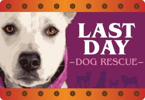 Last Day Dog Rescue Online Store