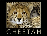 Cheetah Calendars