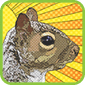 Pop Art Squirrel T-Shirts and Gifts
