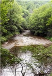 Natures Stream
