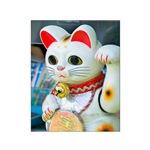 maneki neko - beckoning cat