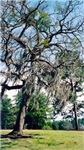 Lake Blackshear Spring 2005