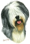 Old English Sheepdog / Bobtail