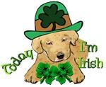 Today I'm Irish Labrador Retriever