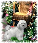 Havanese Owners Gifts Of Art