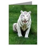 Big Cat Greeting Cards Plain