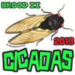 Brood II Cicadas 2013
