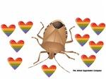 Rainbow Stink Bug