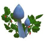 Blue Mushrooms Red Flowers