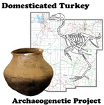 Turkey domestication