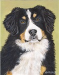 DOGS - 'BERNESE MOUNTAIN DOG'