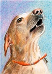 DOGS - SINGING DOG (LABRADOR RETRIEVER)