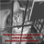 Top Ten Reasons Caged Cat