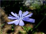 Purple Flower, 1