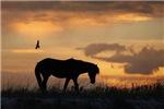 The Corolla Horse Collection