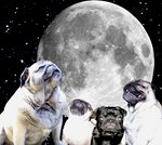 Four Pug Moon Merchandise