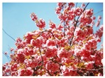"""Blossoms"""