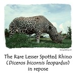 Spotted Rhino