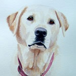 Bella, Yellow Labrador
