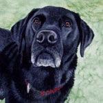 Got Treats? Black Labrador