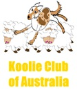 Koolie on Sheep with Koolie Club of Aust