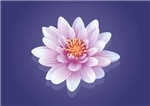 Pastel Water Lily