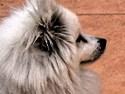 Eskie Profile