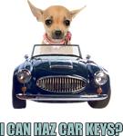 Chihuahua Driving Car