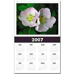 ...Wild Roses 01...