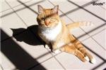 Ann Arbor Cat Clinic Adoption Program