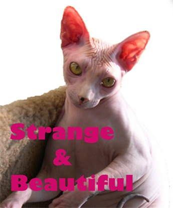 Strange & Beautiful 2