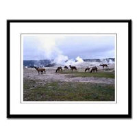 Large Framed Prints Wildlife and Nature Scenes