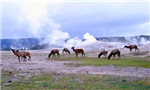Elk at Old Faithful Yellowstone Mugs & Steins