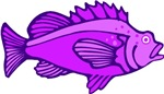 Purple Fish T-shirts & Gifts
