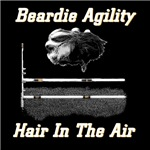 Beardie Agility-Hair in the Air