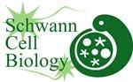 Schwann Cell Biology