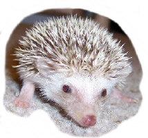Mirindi the Hedgehog