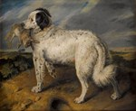 Newfoundland Landseer with Rabbit