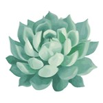 Beautiful Green Succulent