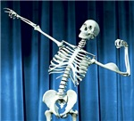 Funny Skeleton Pictures