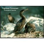 Flightless Cormorant Bird Photo