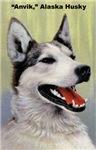 Alaska Husky Dog