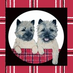 Cairn Terrier Pair