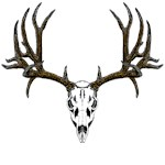 European mount mule deer