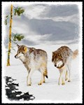 Wolves in Snow Christmas Card