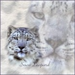 Snow Leopard T-shirts & Gifts