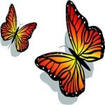Pretty Butterfly's
