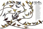 Warblers of New England