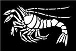 White Lobster Design