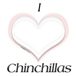 Chinchilla Heart
